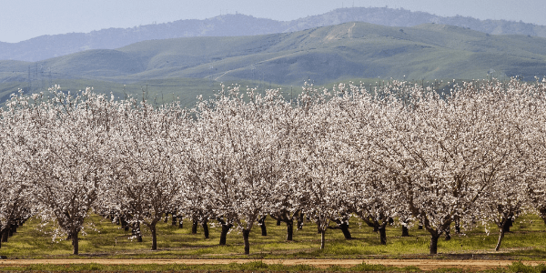 remove-roundup-orchard - serving central and northern california - norcal ag services